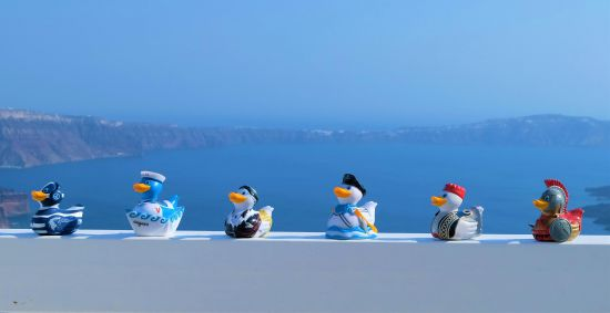 Greek Ducks in Santorini
