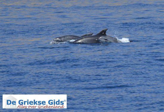 Dolfijnen bij Kos