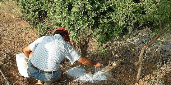 Mastiekwinning Chios