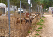 Oproep: Animal Rescue Kefalonia