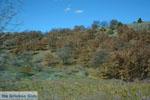 De mooie natuur van Florina | Macedonie Griekenland | Foto 3 - Foto van De Griekse Gids