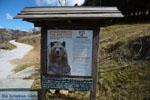 GriechenlandWeb.de Stichting Arktouros beschermd wilde dieren in Florina - Foto GriechenlandWeb.de