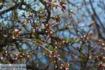 De meren van Prespes | Florina Macedonie | Griekenland foto 30 - Foto van De Griekse Gids