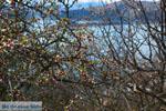 GriechenlandWeb.de De meren van Prespes | Florina Macedonie | Griechenland foto 31 - Foto GriechenlandWeb.de