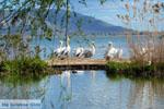 Kastoria | Macedonie Griekenland | Foto 27 - Foto van De Griekse Gids