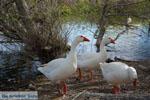 JustGreece.com Kastoria | Macedonie Griekenland | Foto 35 - Foto van De Griekse Gids