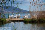 Kastoria | Macedonie Griekenland | Foto 37 - Foto van De Griekse Gids