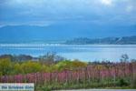 Polifitos-meer Kozani | Macedonie Griechenland | GriechenlandWeb.de foto 10 - Foto GriechenlandWeb.de