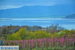 Polifitos-meer Kozani | Macedonie Griekenland | De Griekse Gids foto 12 - Foto van De Griekse Gids