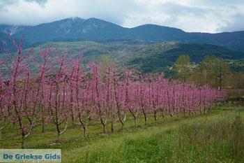 Velvendo  | Kozani Macedonie | De Griekse Gids foto 3 - Foto van De Griekse Gids