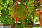 GriechenlandWeb.de Zakros und Kato Zakros - Kreta - GriechenlandWeb.de 66 - Foto GriechenlandWeb.de