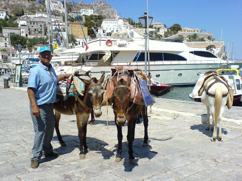 foto Ezels (muilezels of paarden) aan de haven van Hydra