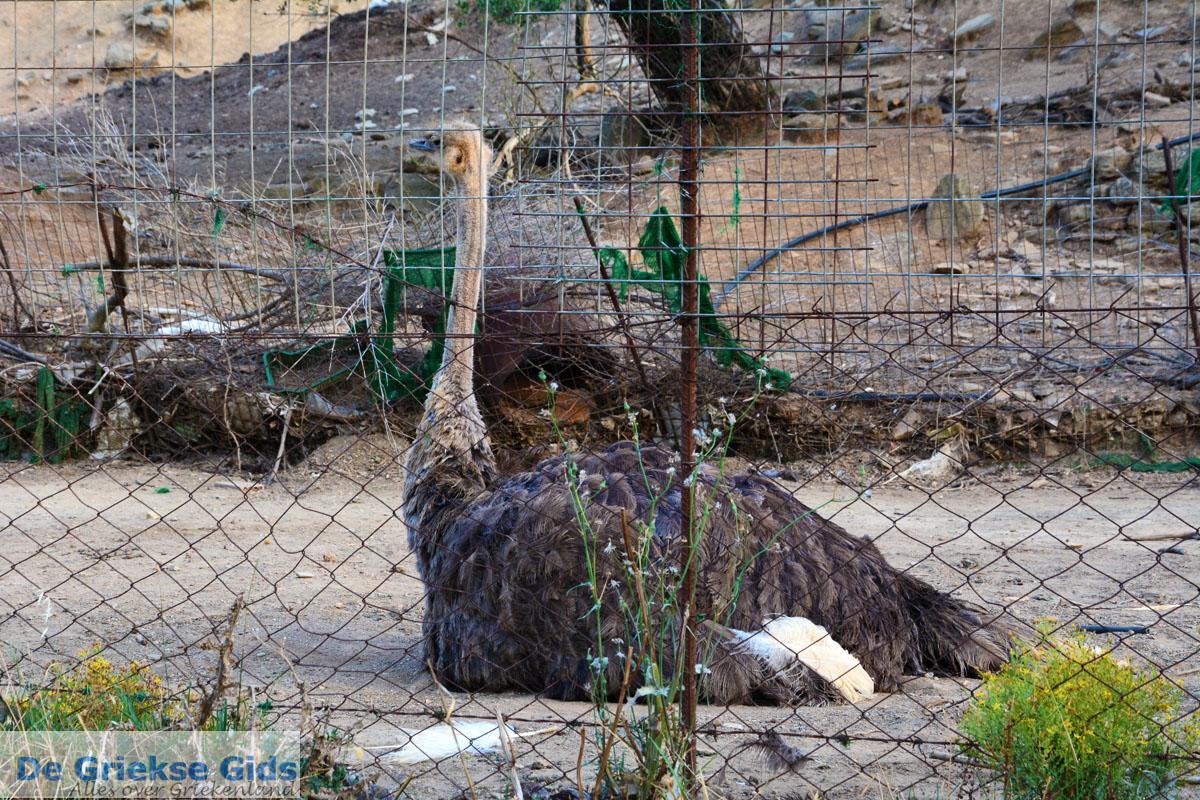 foto Paradisi Evia   Griekenland   Foto 2