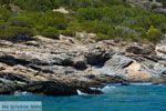 Petali Evia Eilanden | Marmari Evia | Foto 45 - Foto van De Griekse Gids
