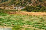 Giannitsi Evia | Griekenland | Foto 36 - Foto van De Griekse Gids