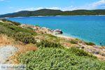 Bij Golden beach Evia | Marmari Evia | Griekenland foto 48 - Foto van De Griekse Gids